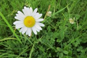 Daisy, Katie Spring