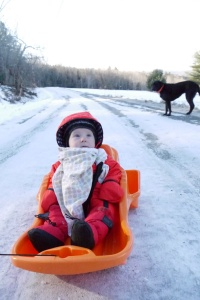 Waylon in his sled