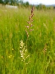 wild pasture: close up