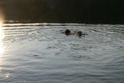 Nobee and Sam fetch a stick