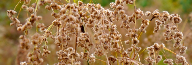 going to seed