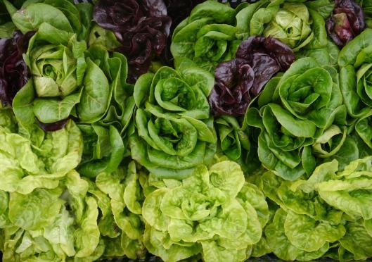 November Lettuce