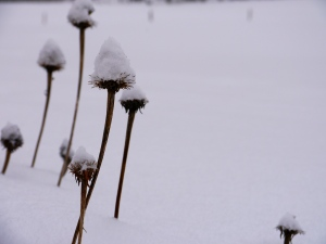 snow-hat