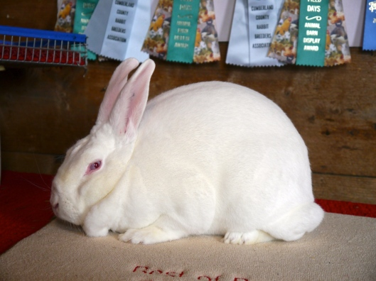 Silver Ridge Rabbitry: New Zealand Rabbit